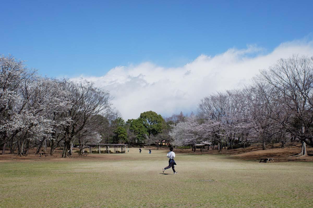 春の公園を走るランナー