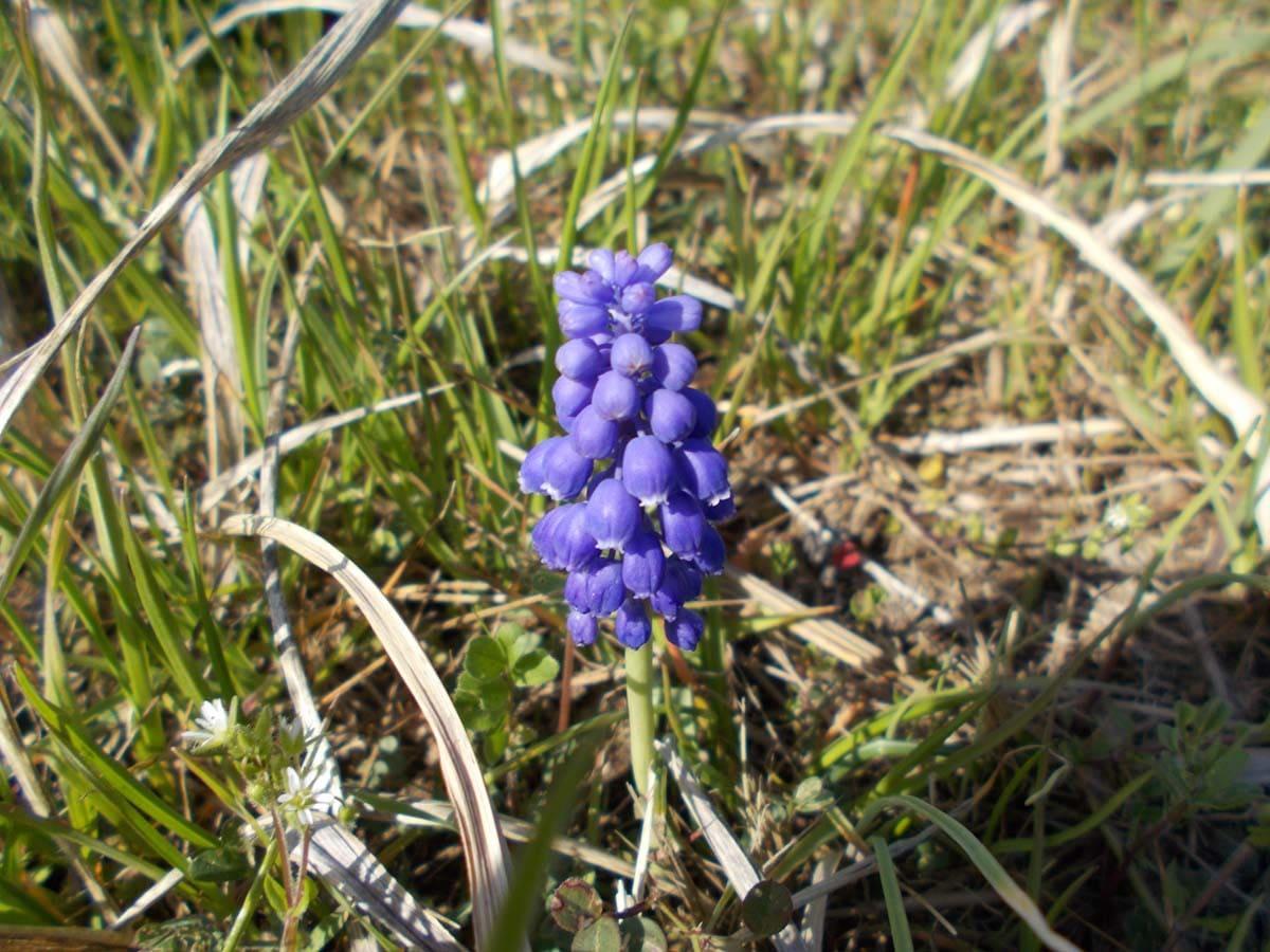道端に咲く紫の花