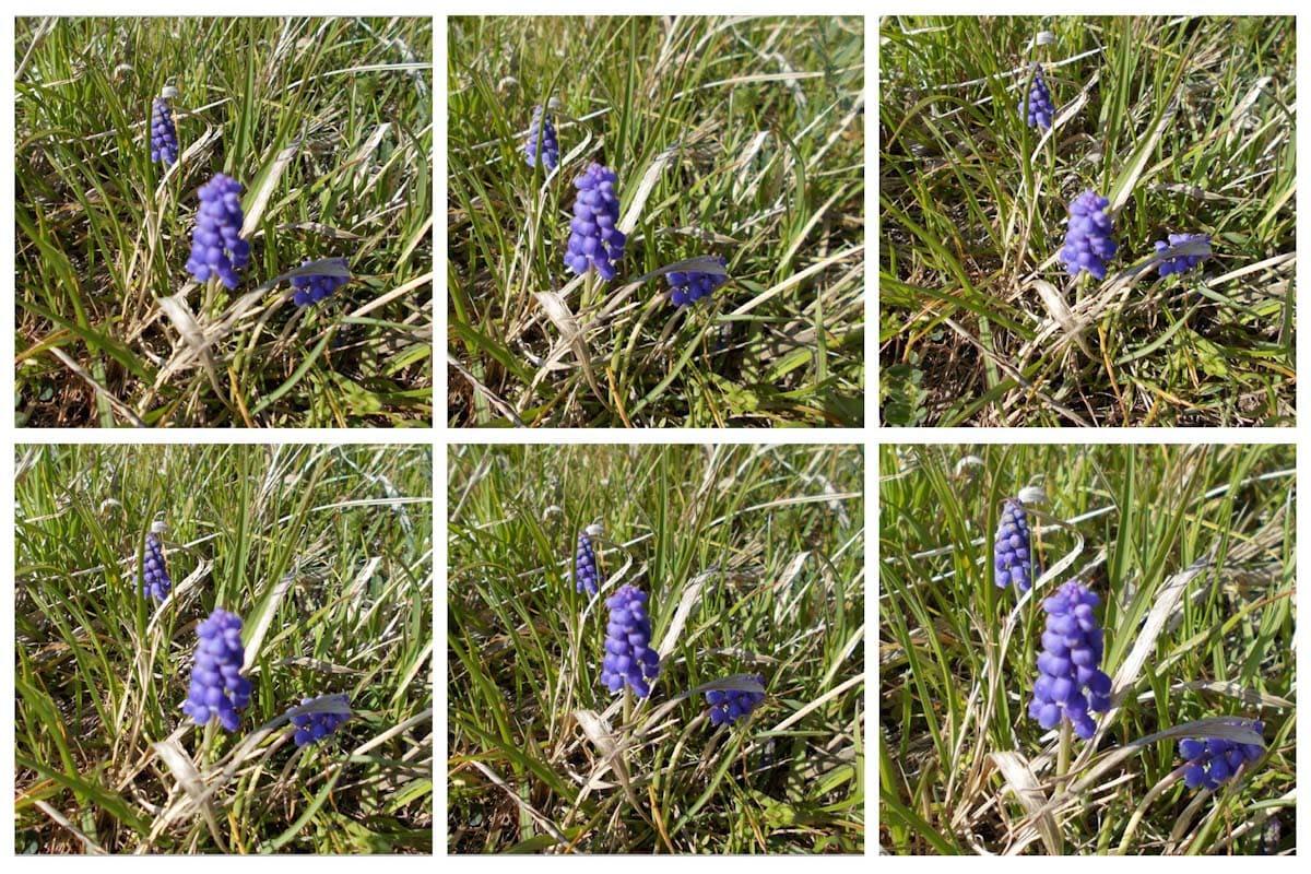 道端に咲く紫色の花