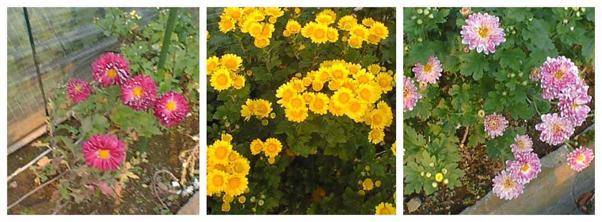 黄色と赤い花