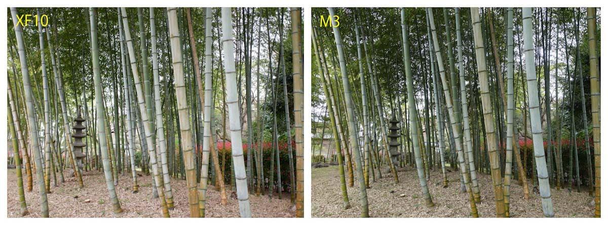 公園の竹林