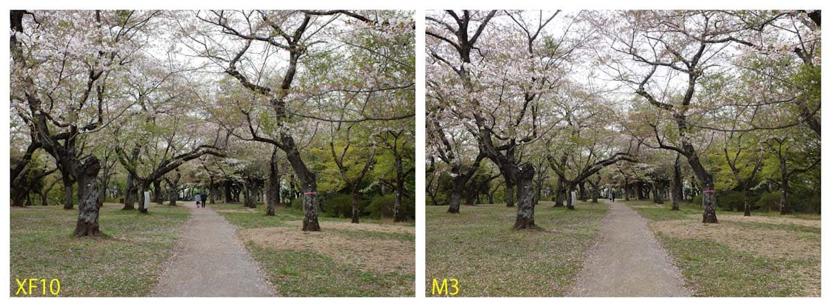 桜のある公園風景