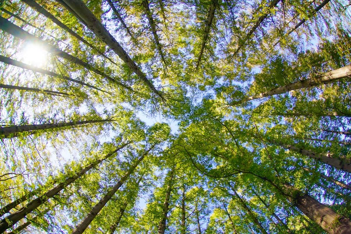 新緑の木々を見上げて