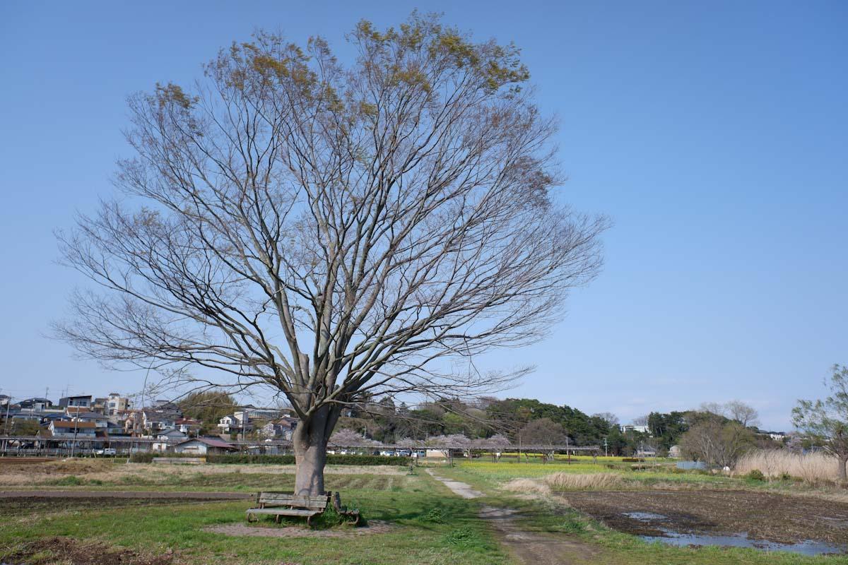 大きな木のある空き地