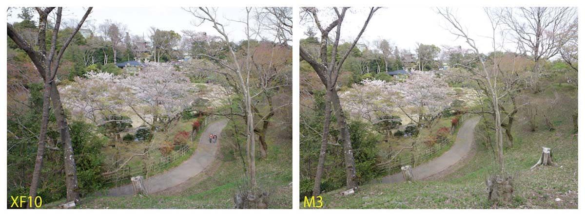 桜が咲く公園の風景