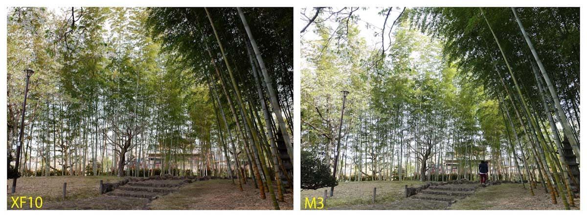 緑がいっぱいの竹林