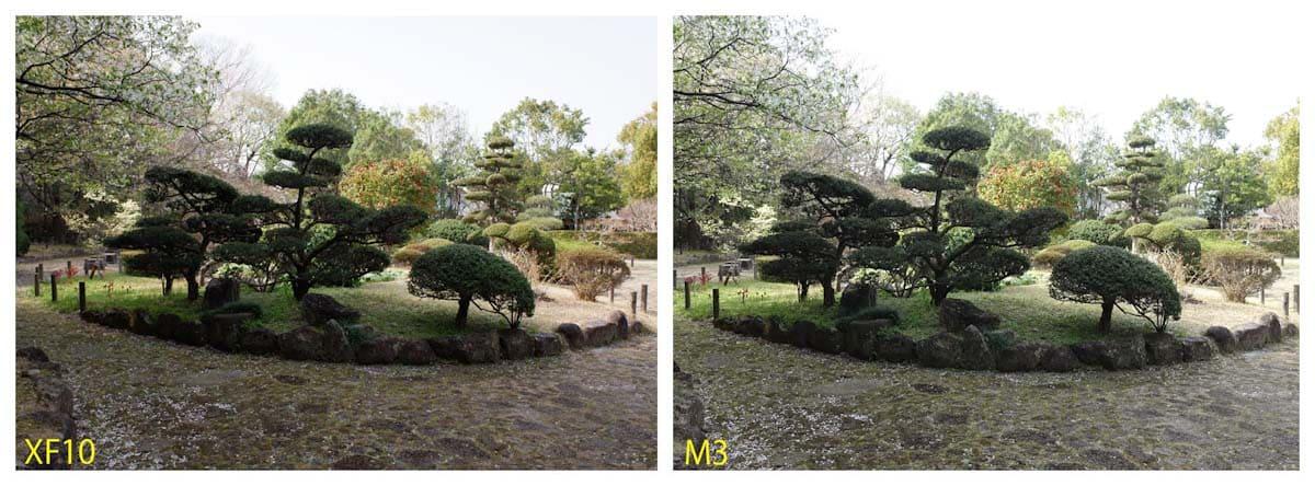 手入れされた植物と庭園の歩行道