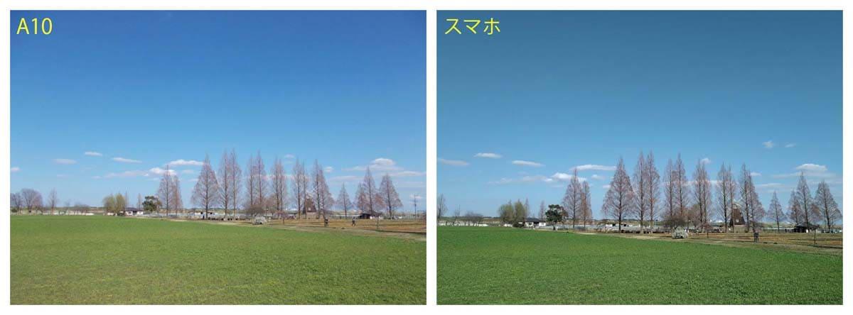 青空と緑のある公園景色