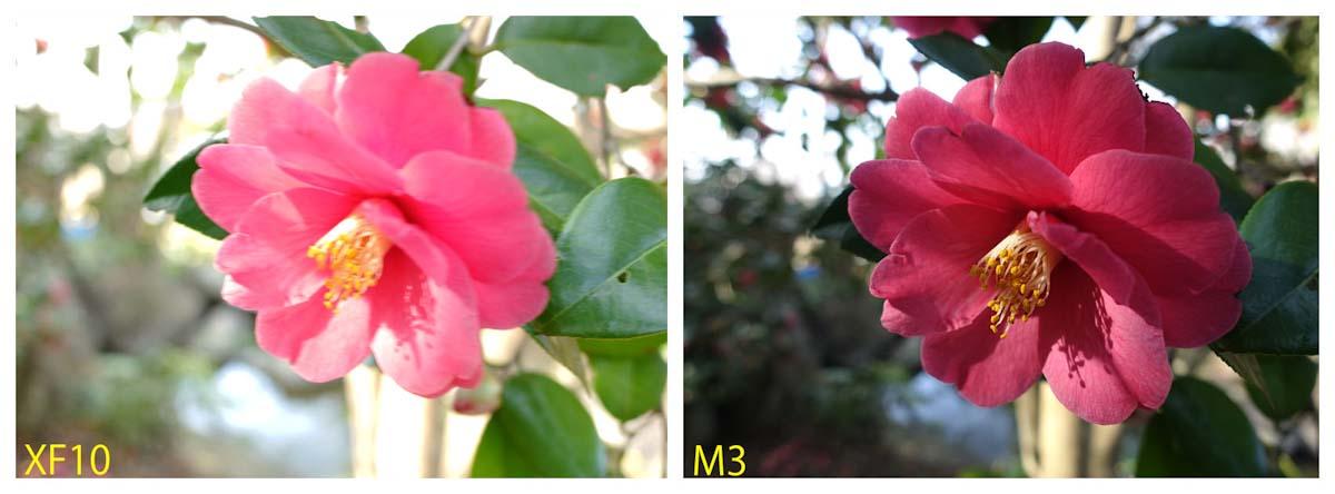 椿の花写真を比較