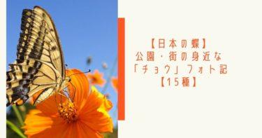 【日本の蝶】公園・街の身近な「チョウ」フォト記【16種】
