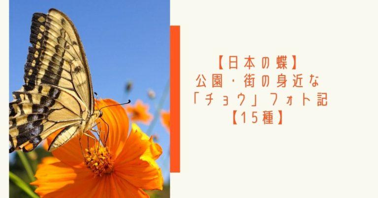 日本の蝶15種