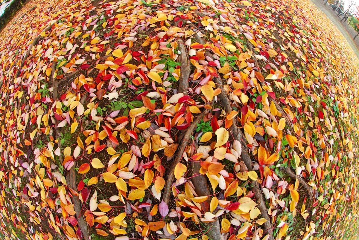 たくさんの落ち葉がある景色