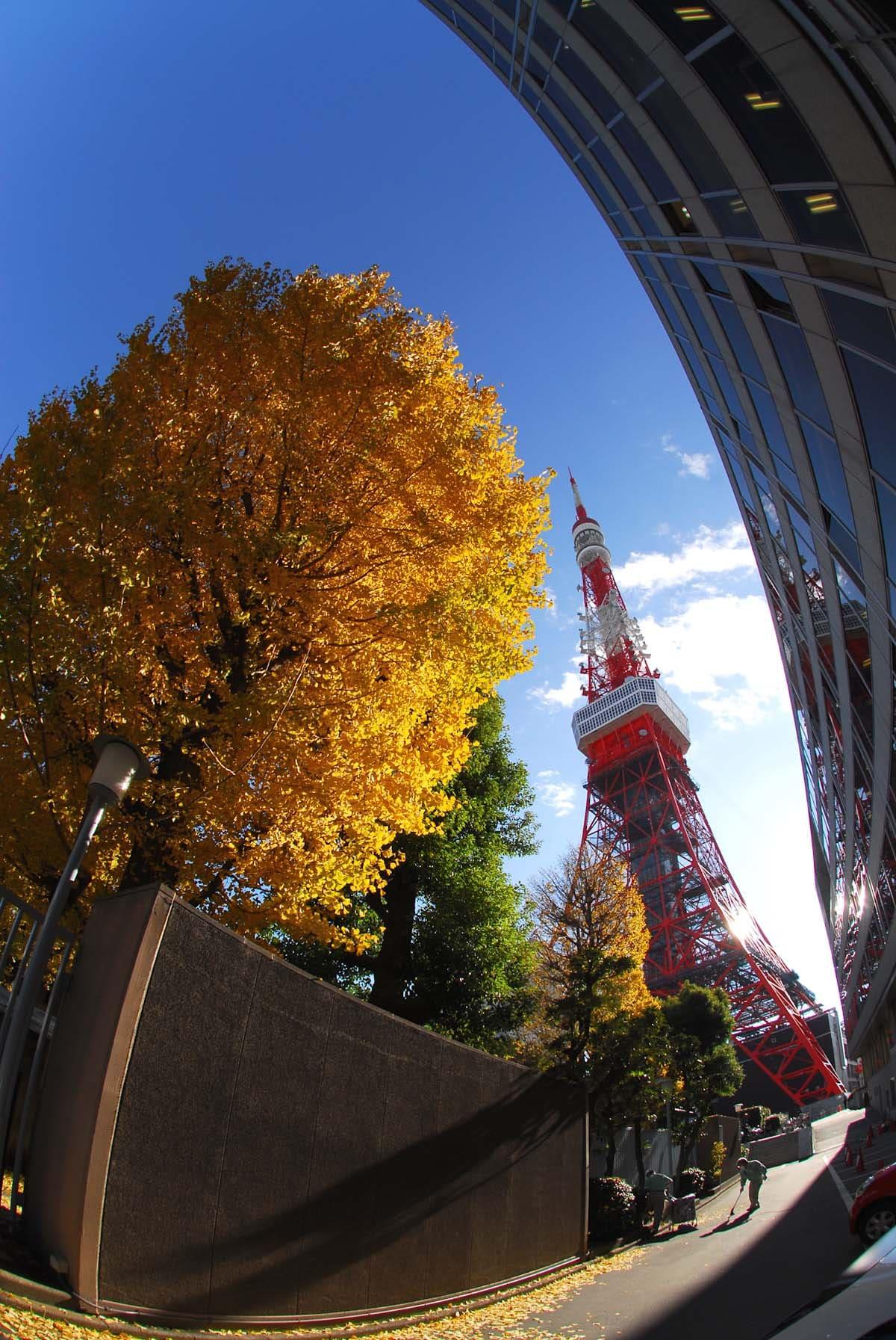 東京タワーと黄葉