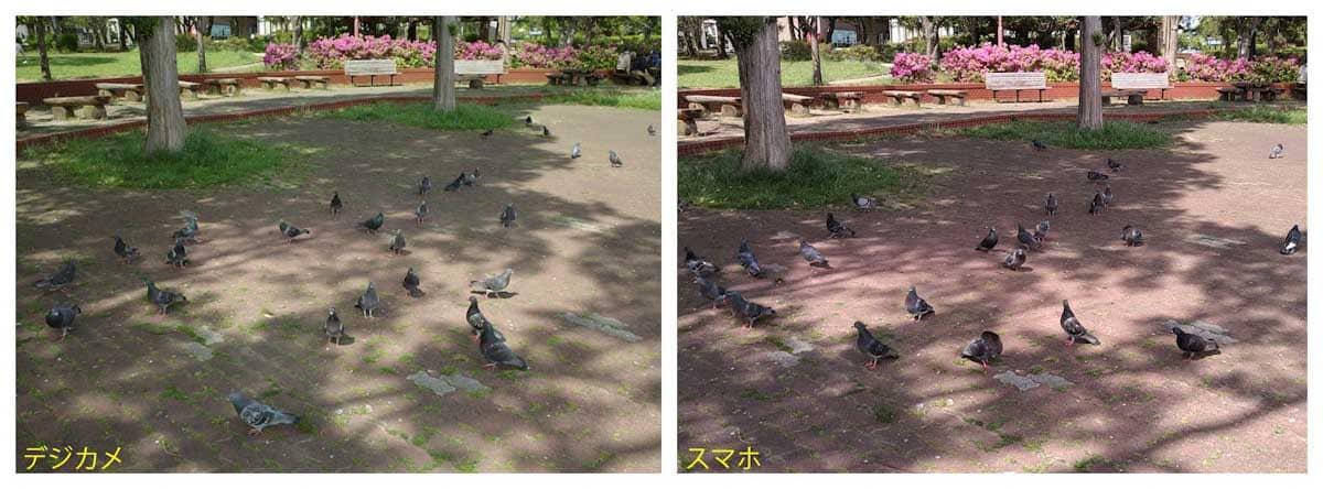 たくさんの鳩
