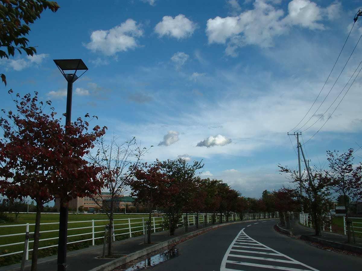 街路樹の道