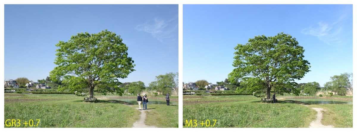 青空と大きな木
