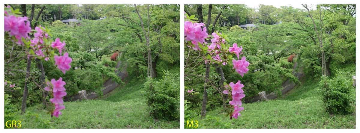 新緑とツツジの花がある景色