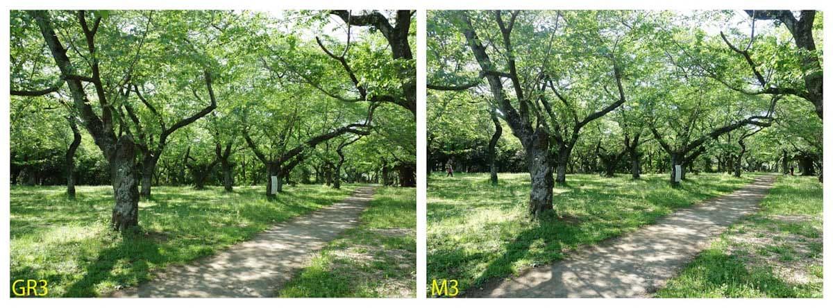 緑の木々が茂る道