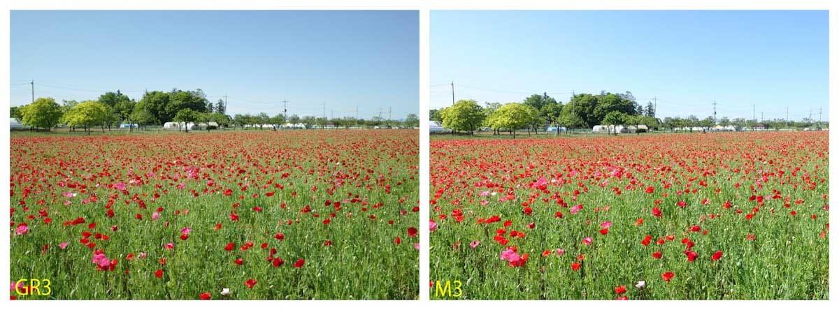 赤色のポピー畑