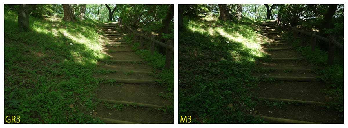 公園の森に囲まれた階段