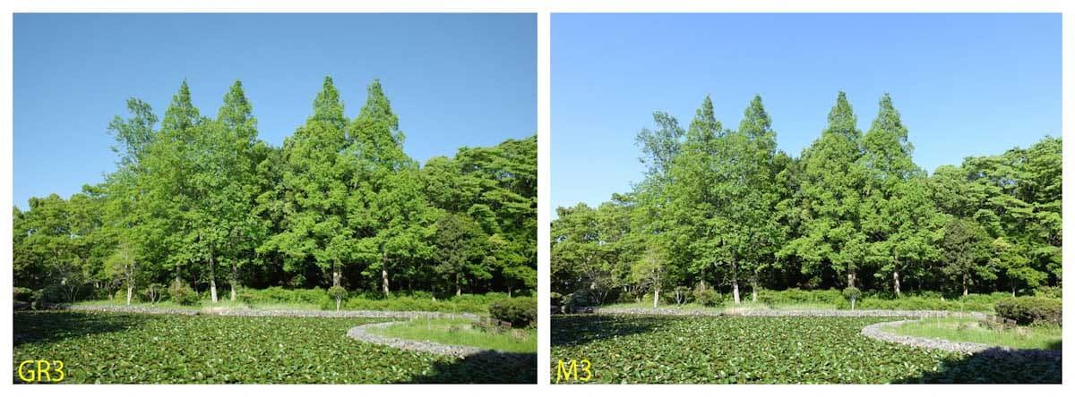 青空と緑の木々