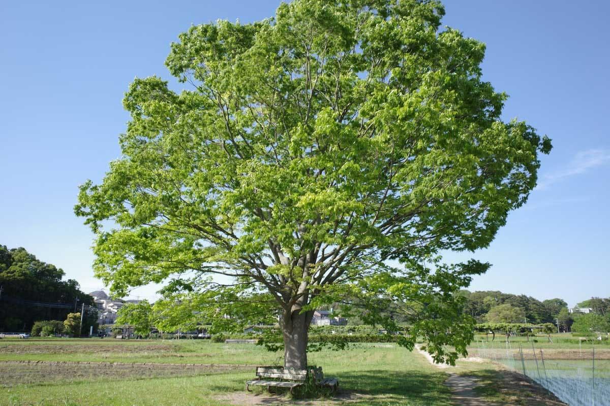 緑が美しい大きな一本の木