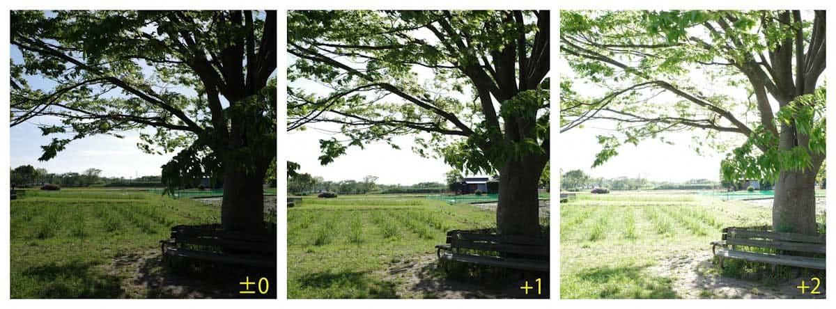 ベンチと緑の木