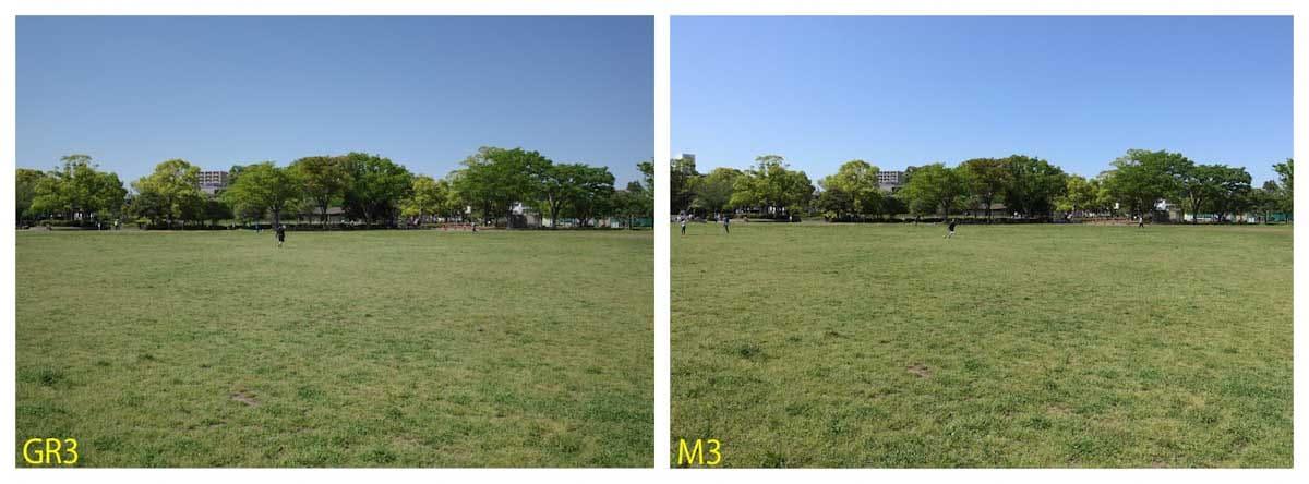 広大な公園の芝生