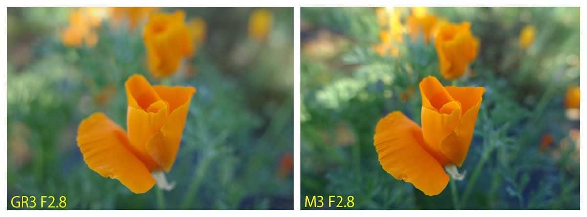 咲き始めのオレンジ色のポピー