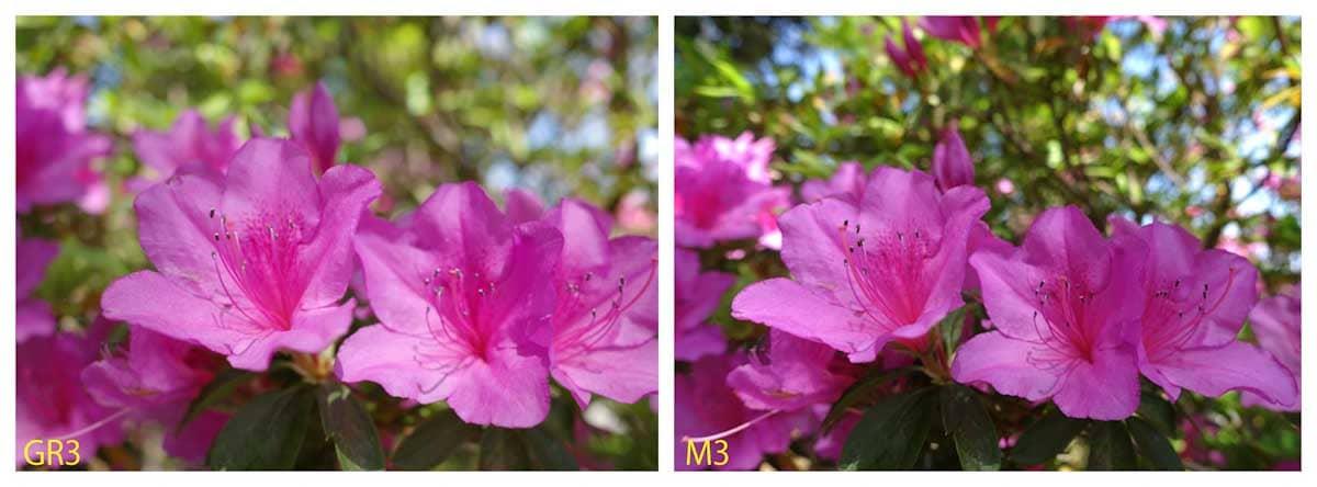 見ごろを迎えたツツジの花