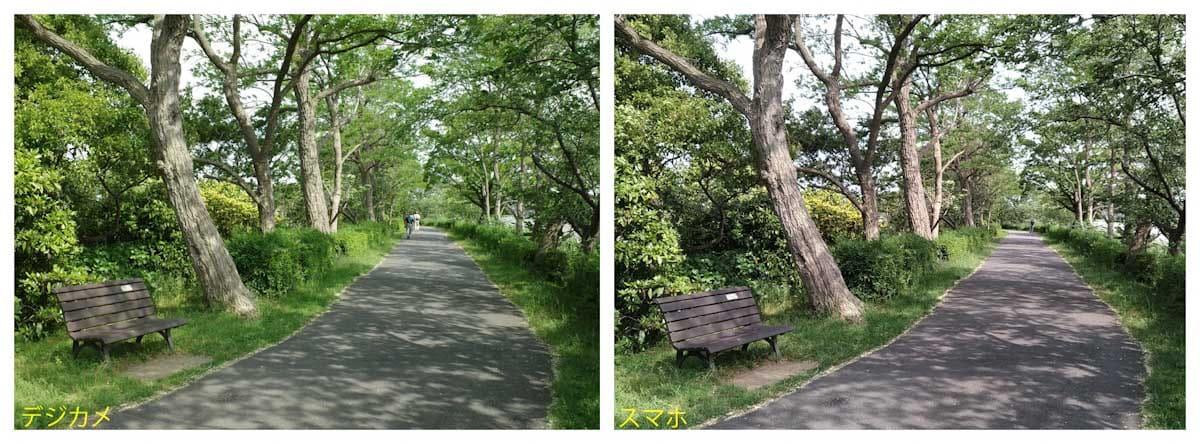 緑の木々がたくさんある歩道