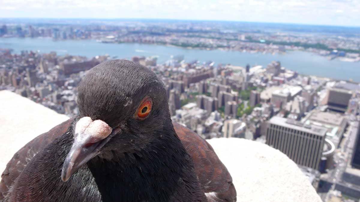 展望台から眺めたハトと街並み