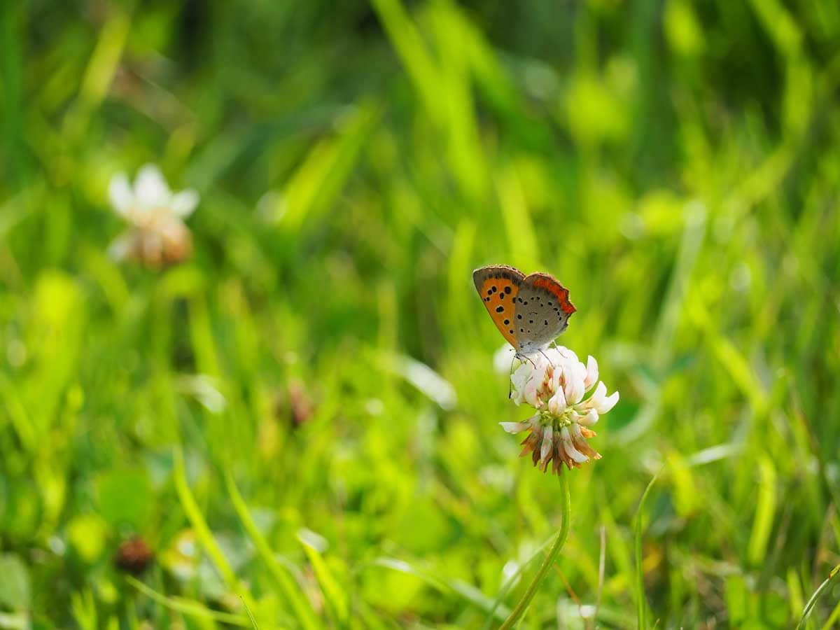小さなオレンジ色の蝶