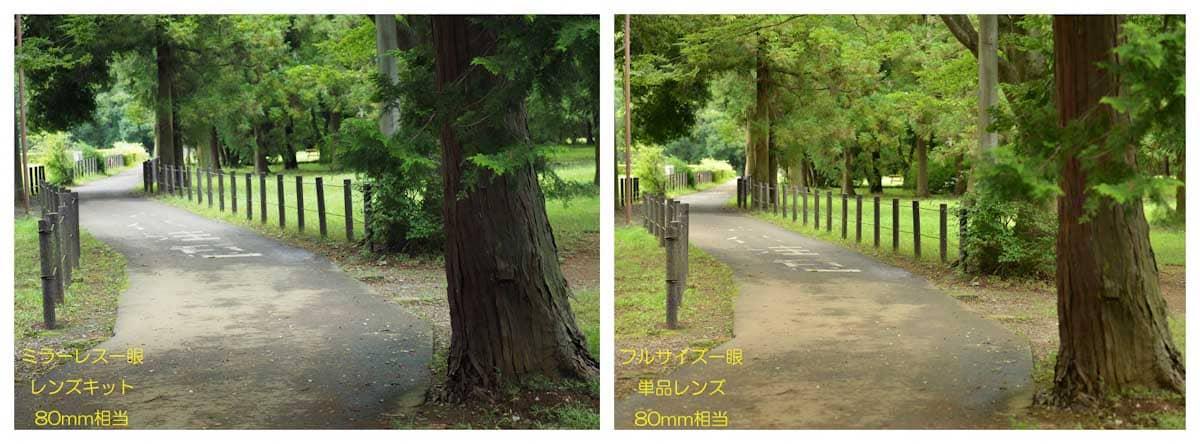 公園の歩道