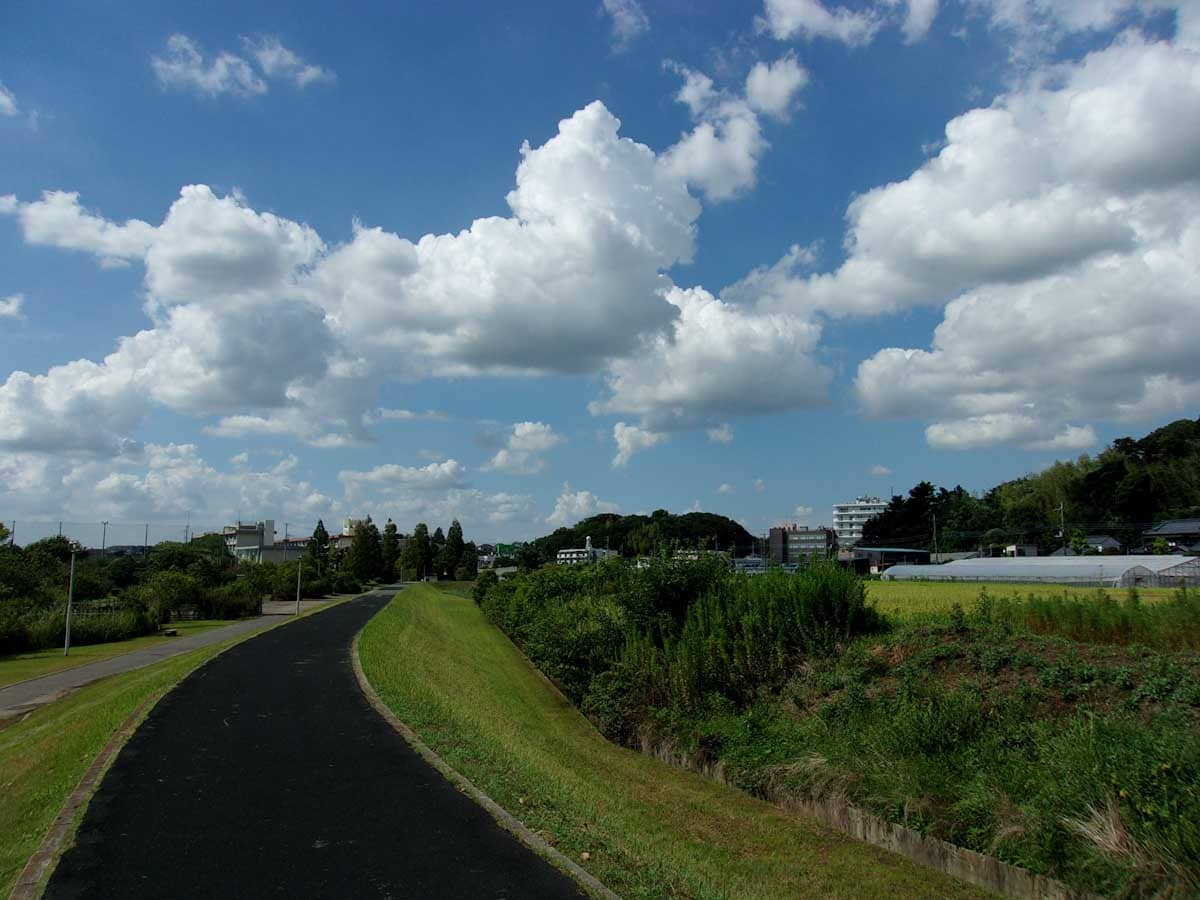緑のある歩道