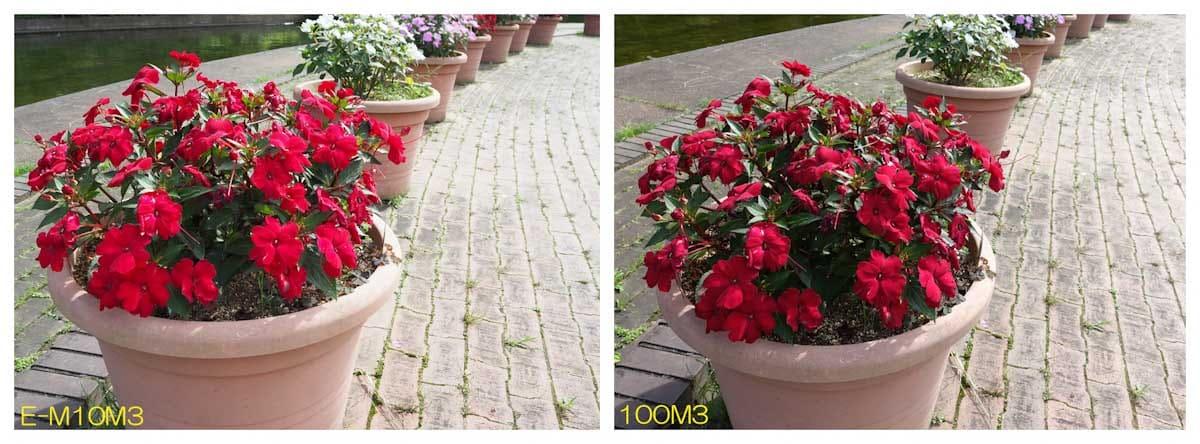 赤い花が植えられた花鉢