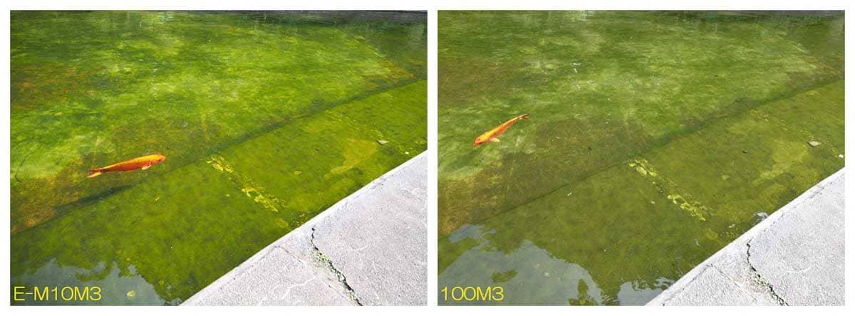 池で泳ぐオレンジ色の鯉