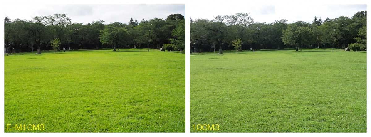 緑がたくさんある広場