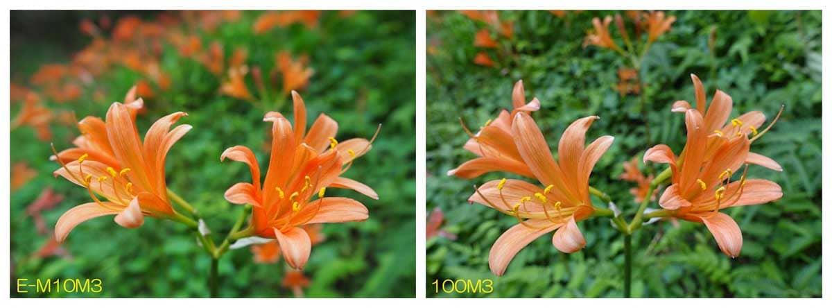 オレンジ色をしたゆりの花