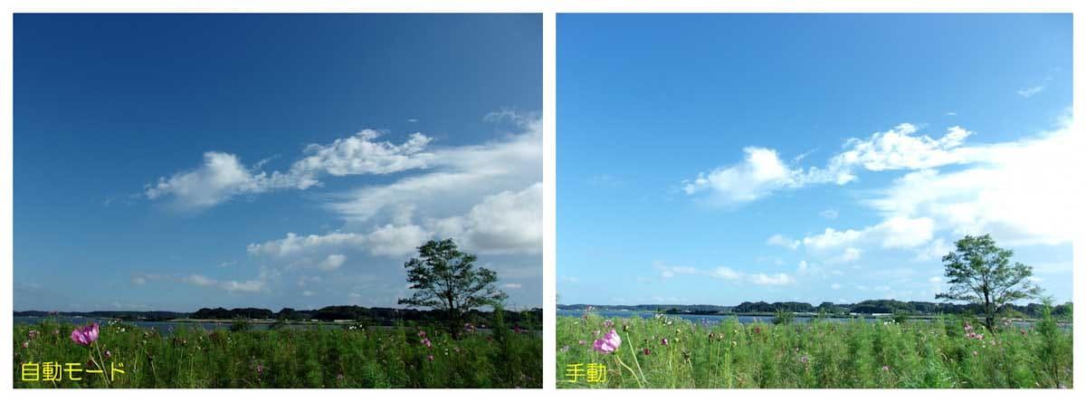 一本の木と青空