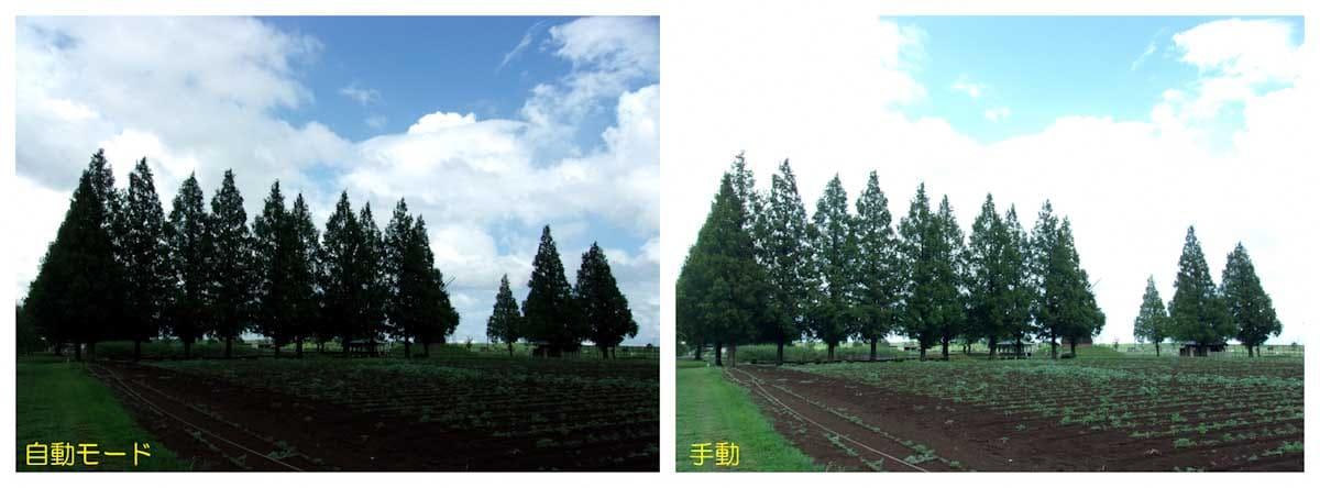 風車と木々