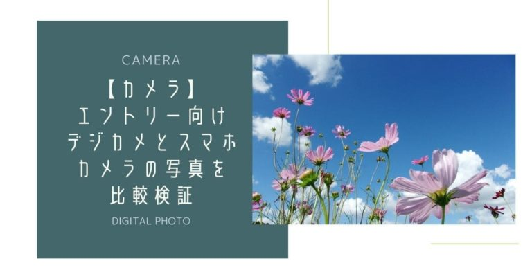 コスモスの花々と青空
