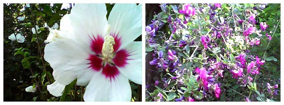 白い花と紫色の花々