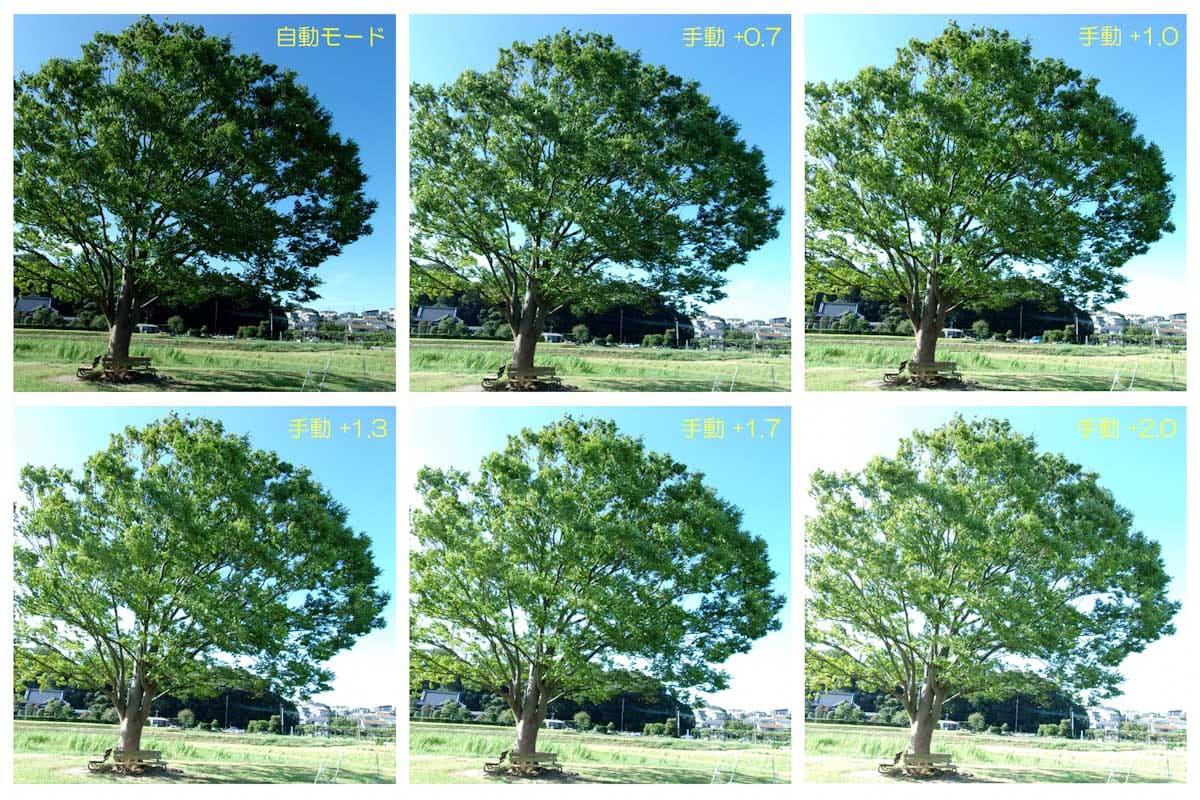 大きな一本の緑の木