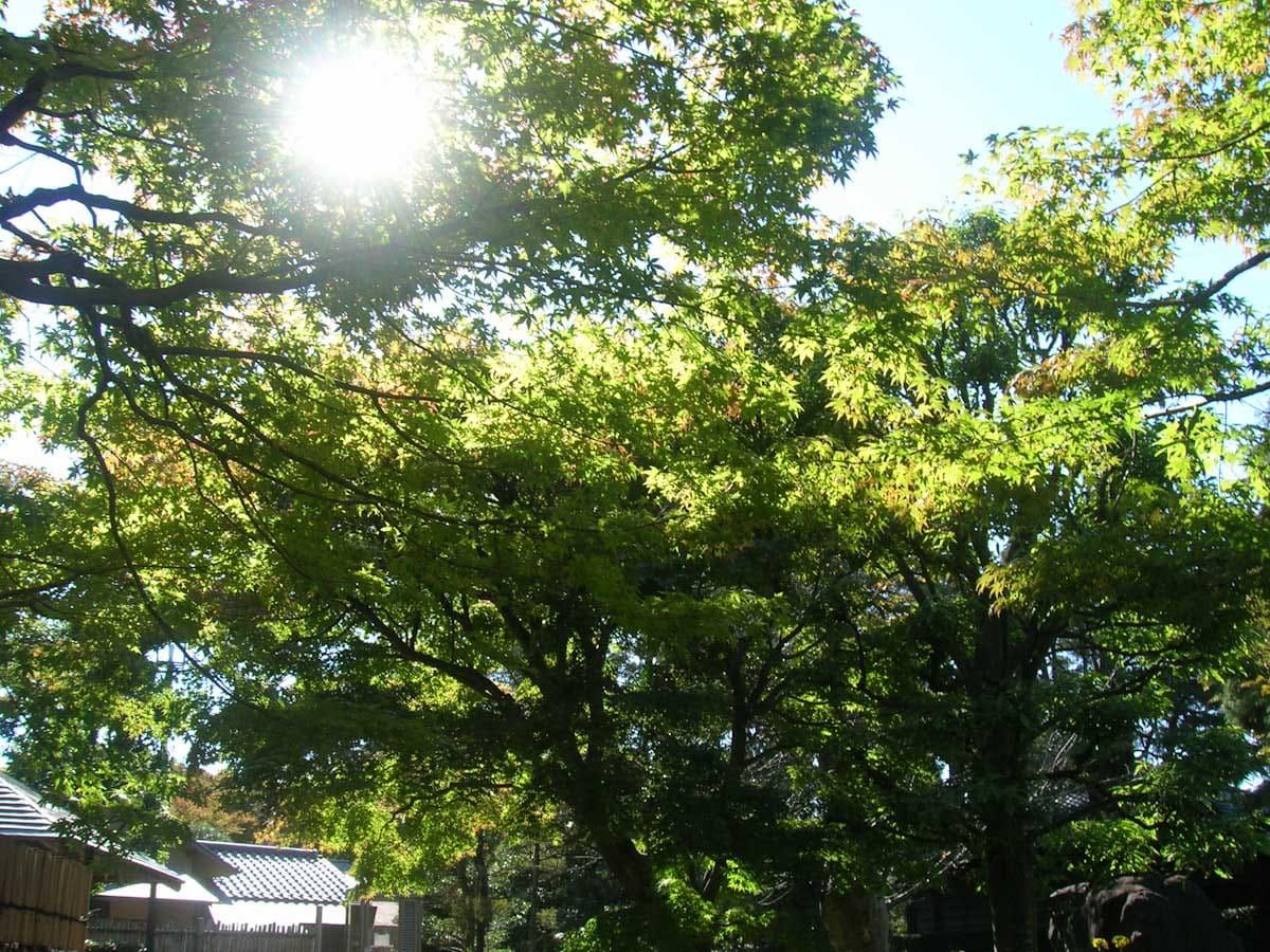 逆光で見た緑の木々