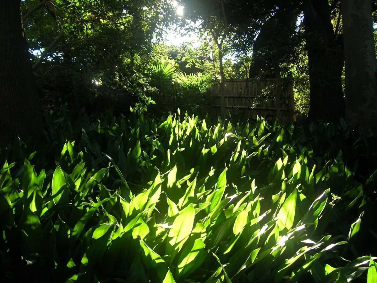 太陽に照らされる緑の葉