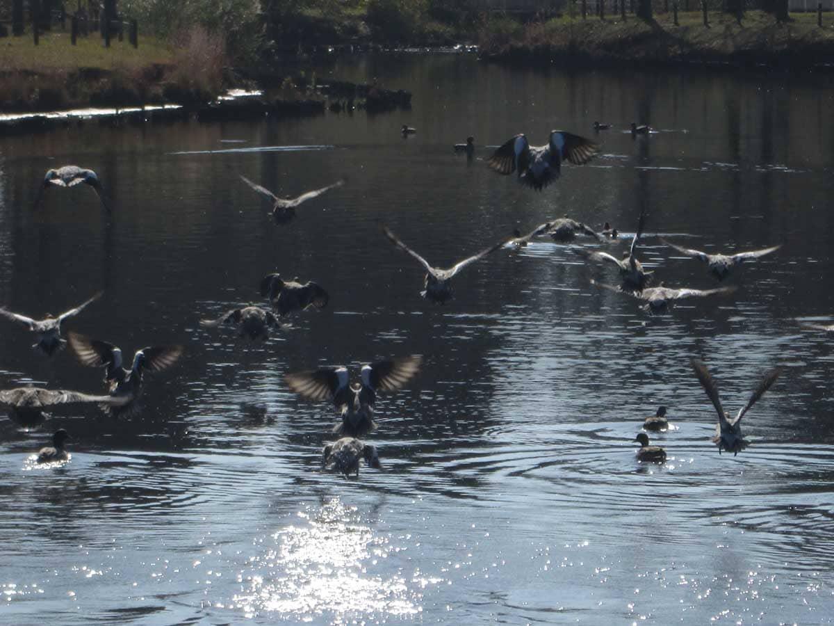 ものすごい勢いで飛びだつ鳥たち