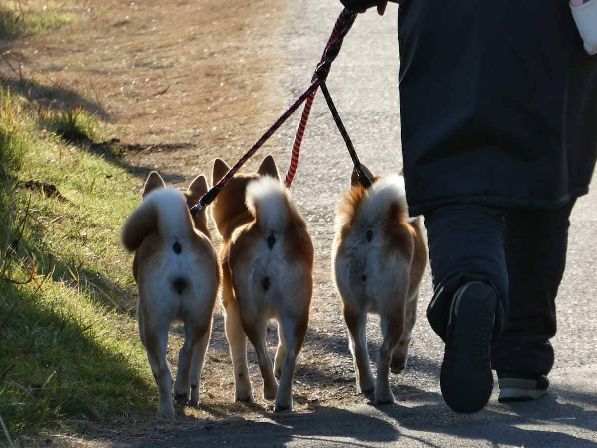 お散歩中の3匹のワンちゃん