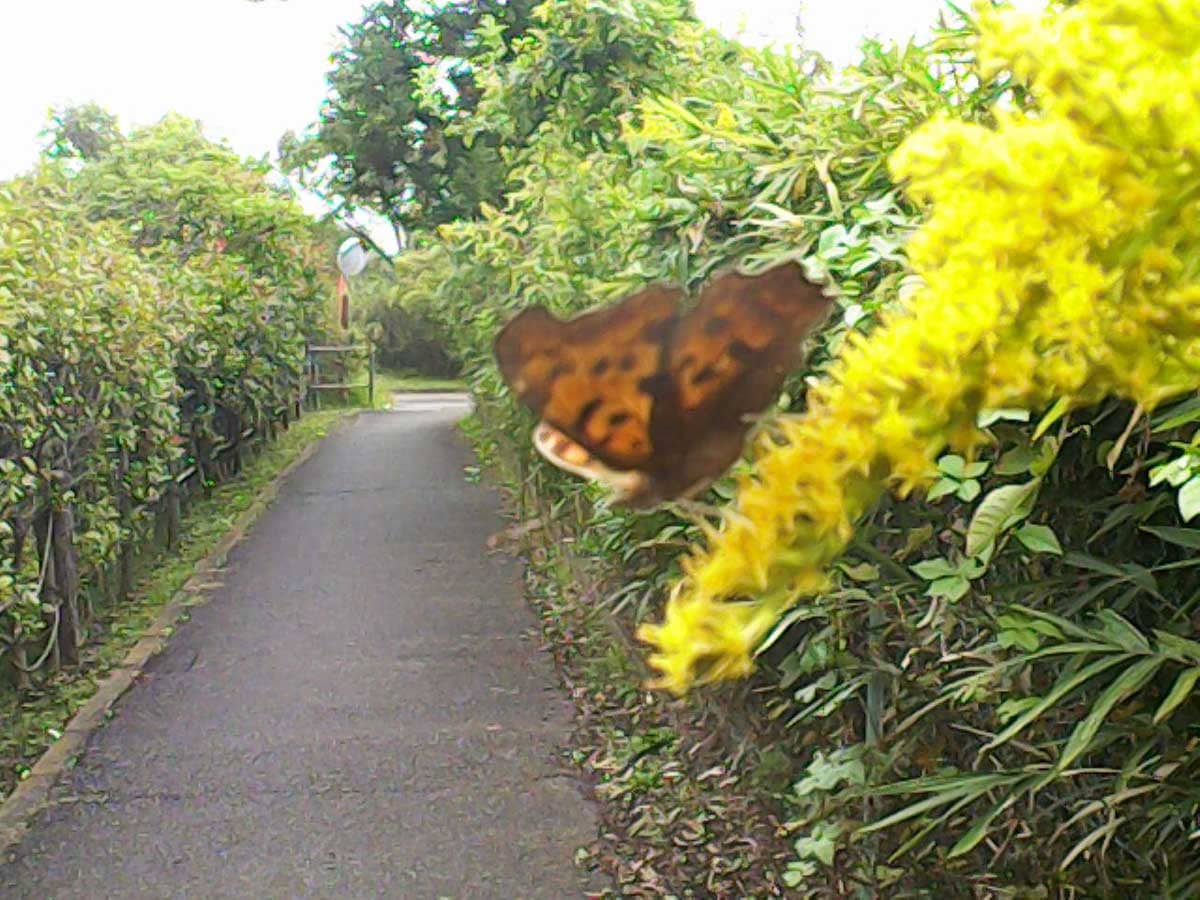 蝶に近づいて撮影した写真