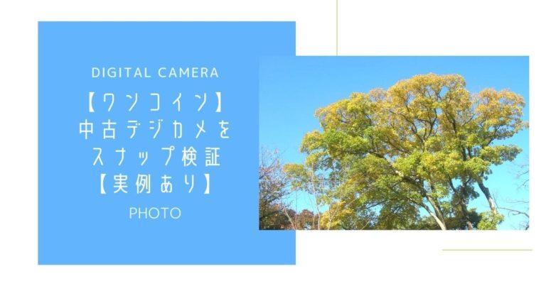 青空と大きな緑の木